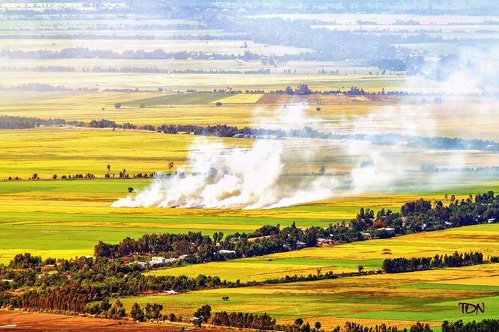 Mekong Delta Chau Doc rice field